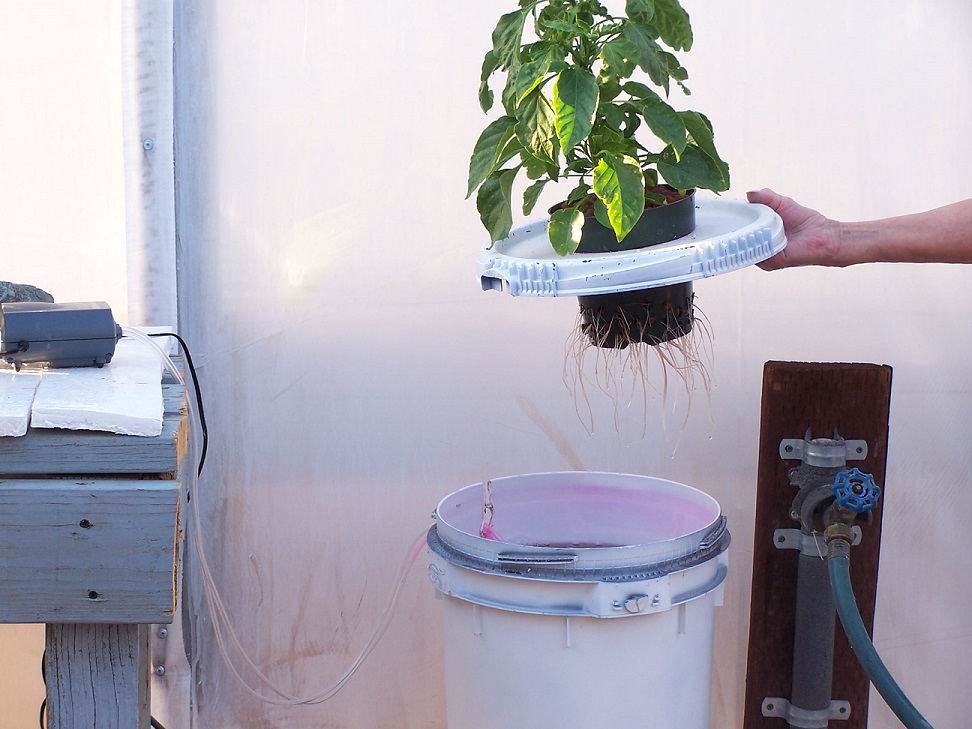 Water Culture Hydroponic Systems