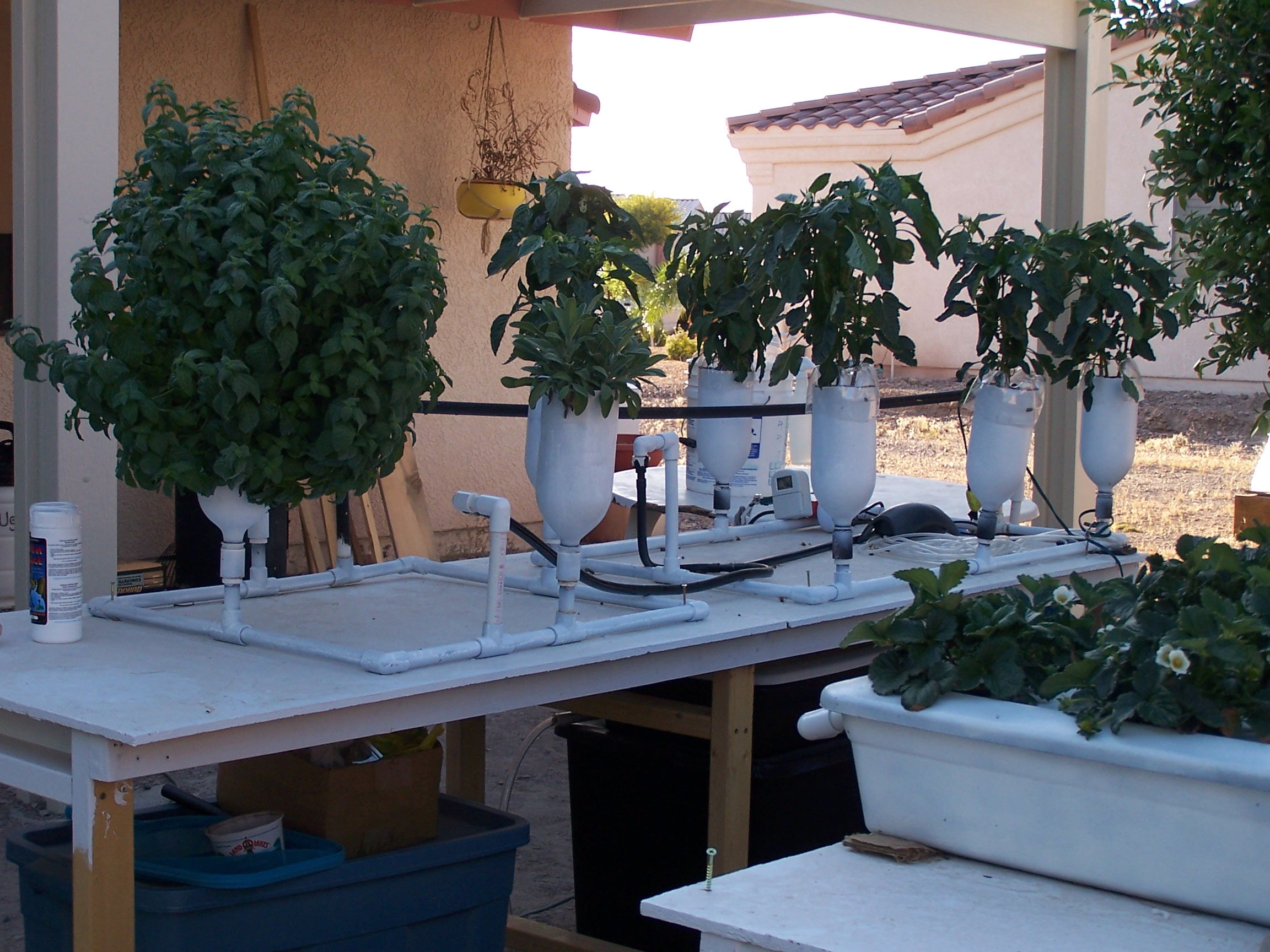 6 Plant Ebb Amp Flow Flood And Drain Hydroponic System
