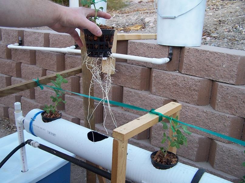 twelve plant hydroponic system design plans
