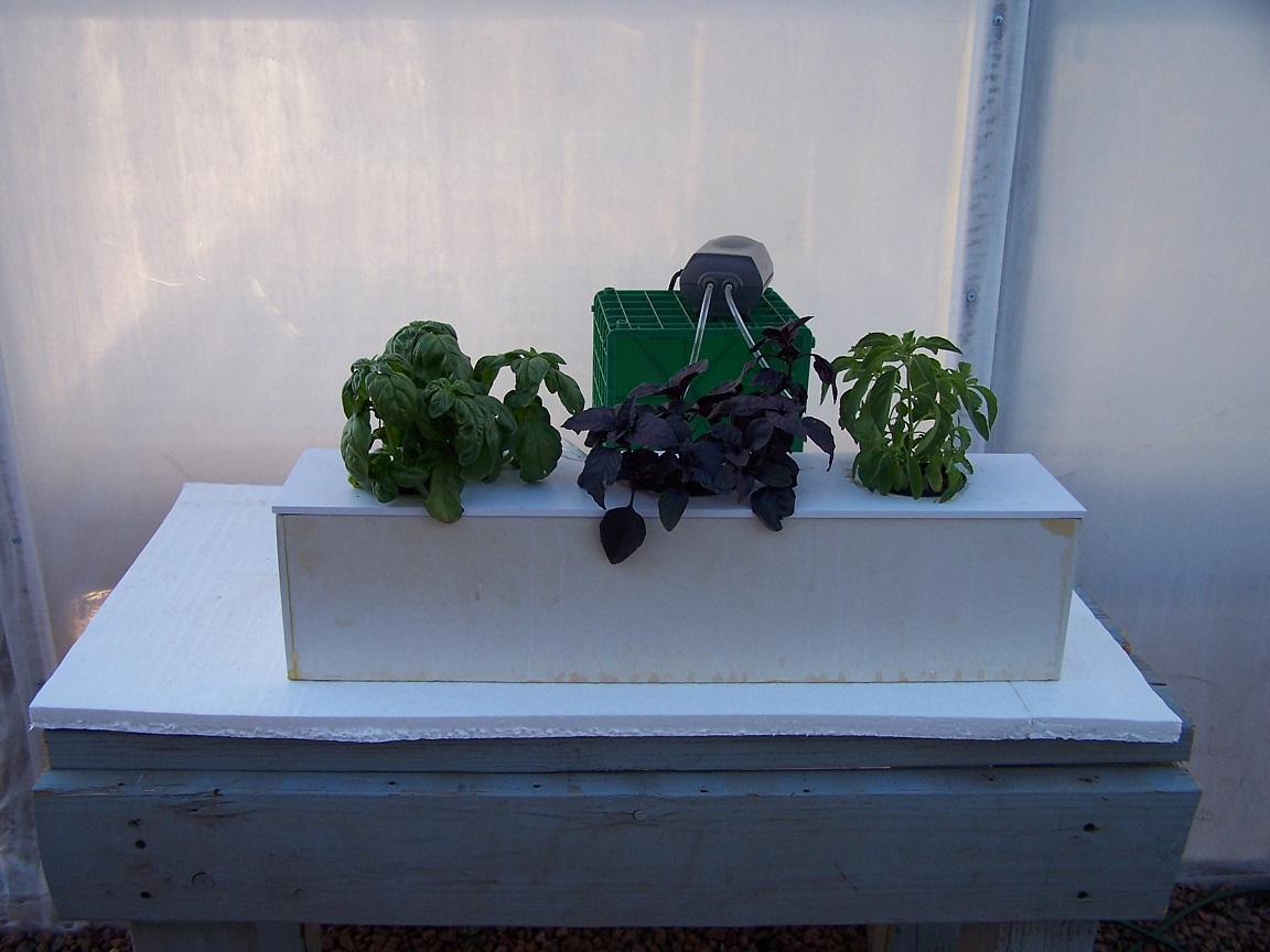 Tips for Growing Plants in Hydroponic Systems