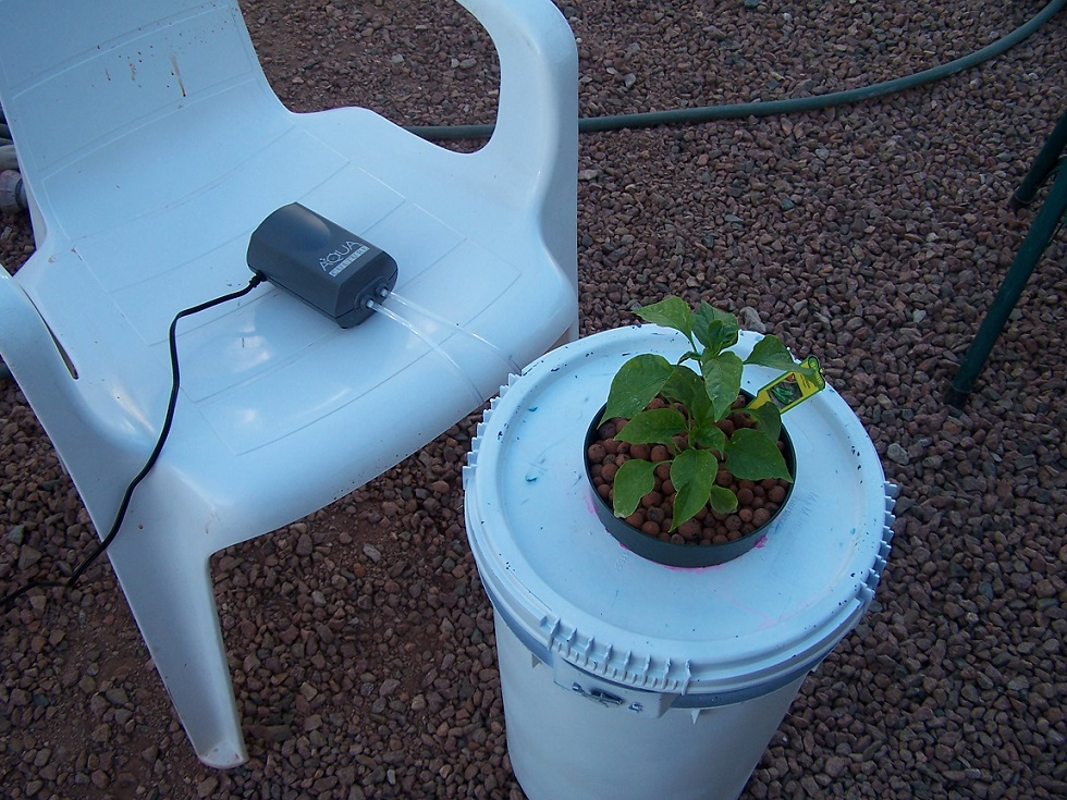 Tips For Growing Plants Successfully With Hydroponic Systems