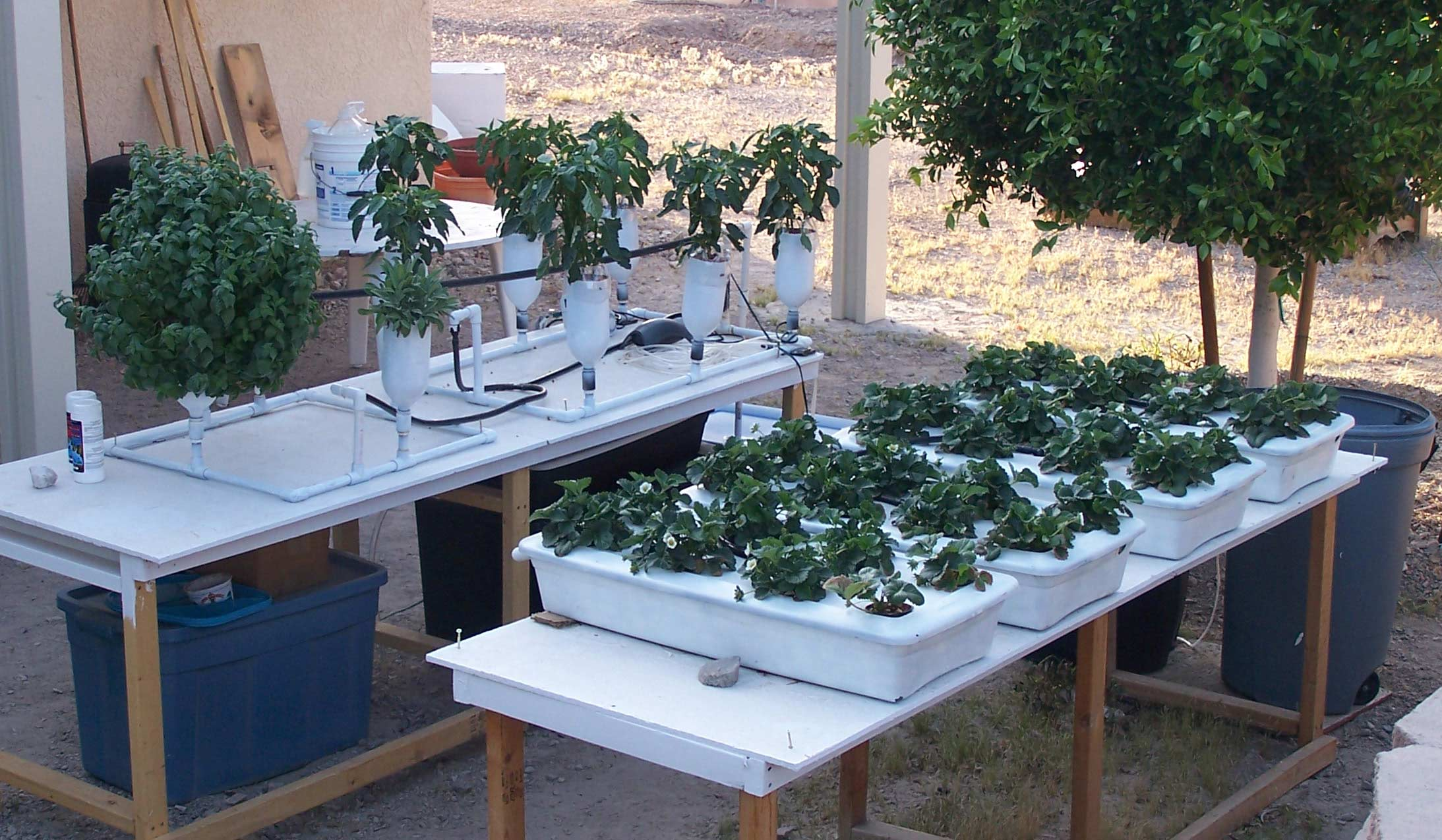 Hydroponic Flood Table Plants growing in home built hydroponic systems